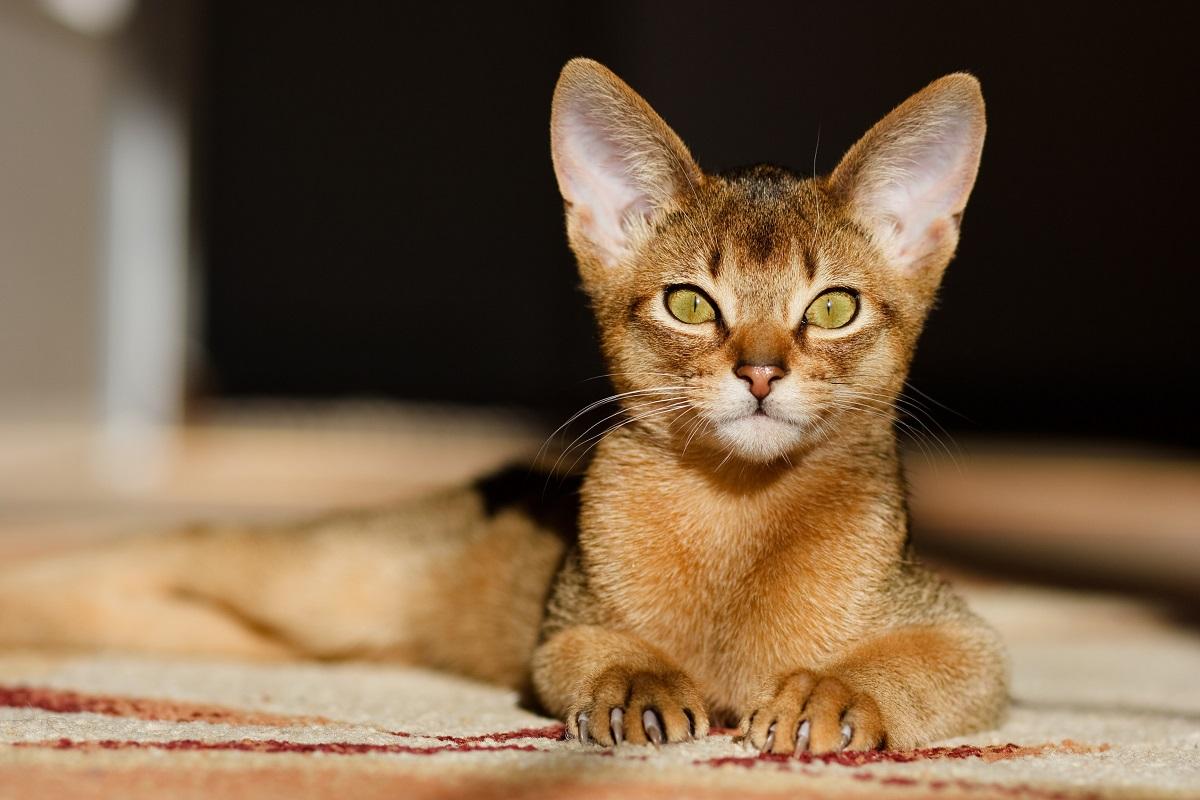 Welt kleinste katzen der Die kleinsten