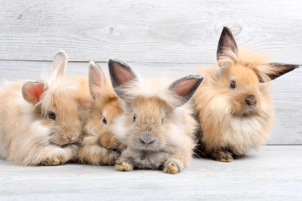 Artgerechte Haltung von Kaninchen   herz fuer tiere.de