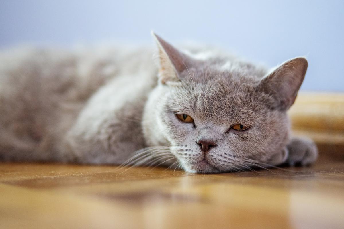 Katzen krebs erkennen bei KREBSERKRANKUNGEN BEI