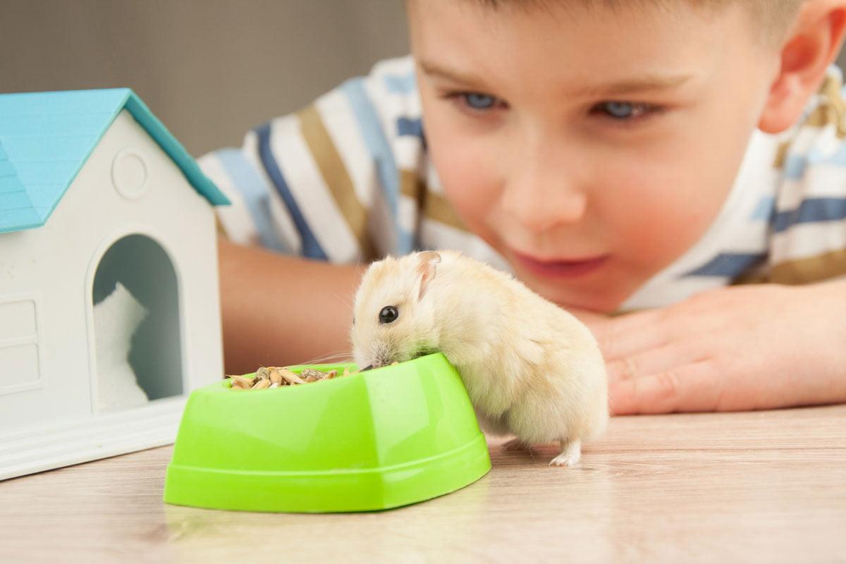 Hamster Als Haustier Fur Kinder Herz Fur Tiere Herz Fuer Tiere De