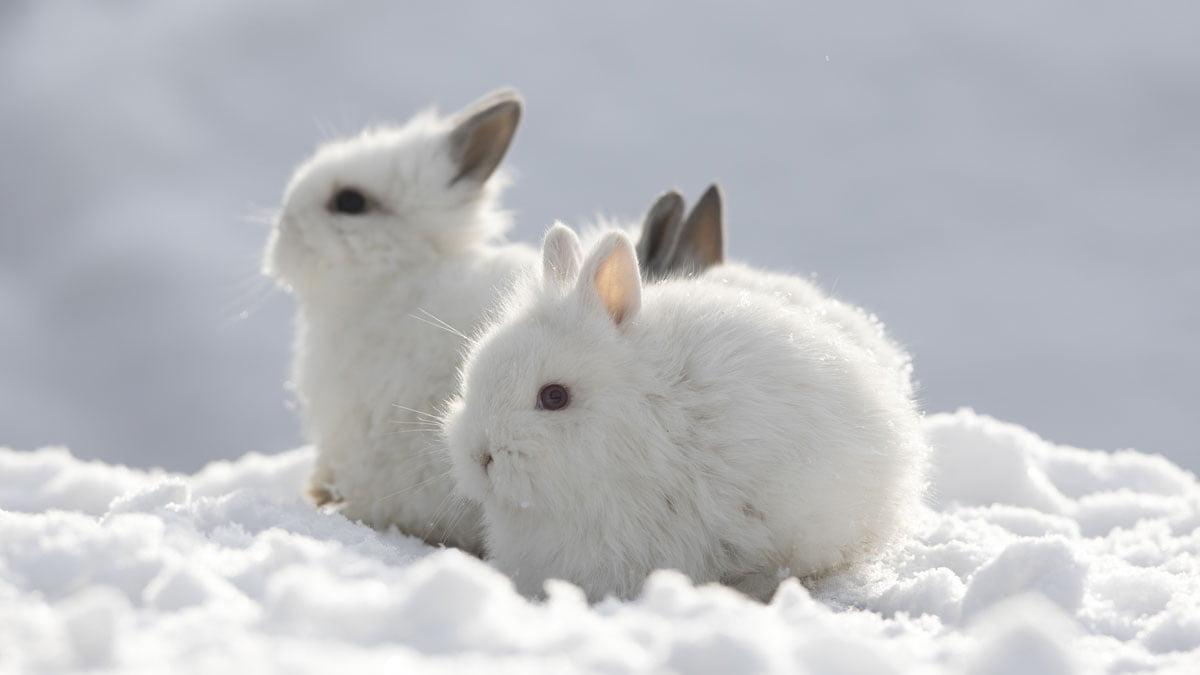 Außenhaltung von Kaninchen im Winter   Herz für Tiere   herz fuer ...