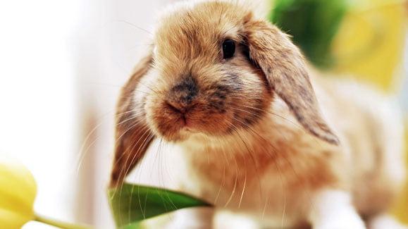 Kaninchen ungiftige pflanzen für Kräuter für