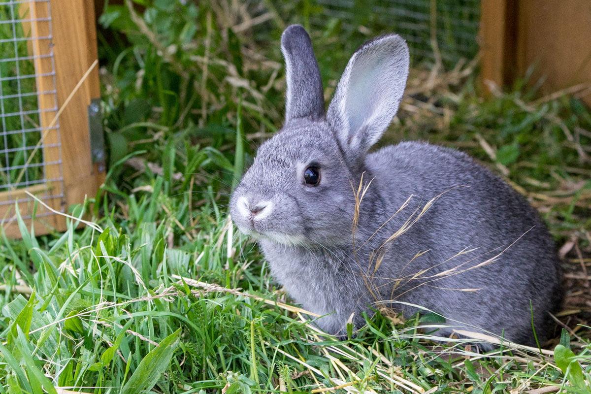 Kaninchen beschäftigen So geht's   herz fuer tiere.de