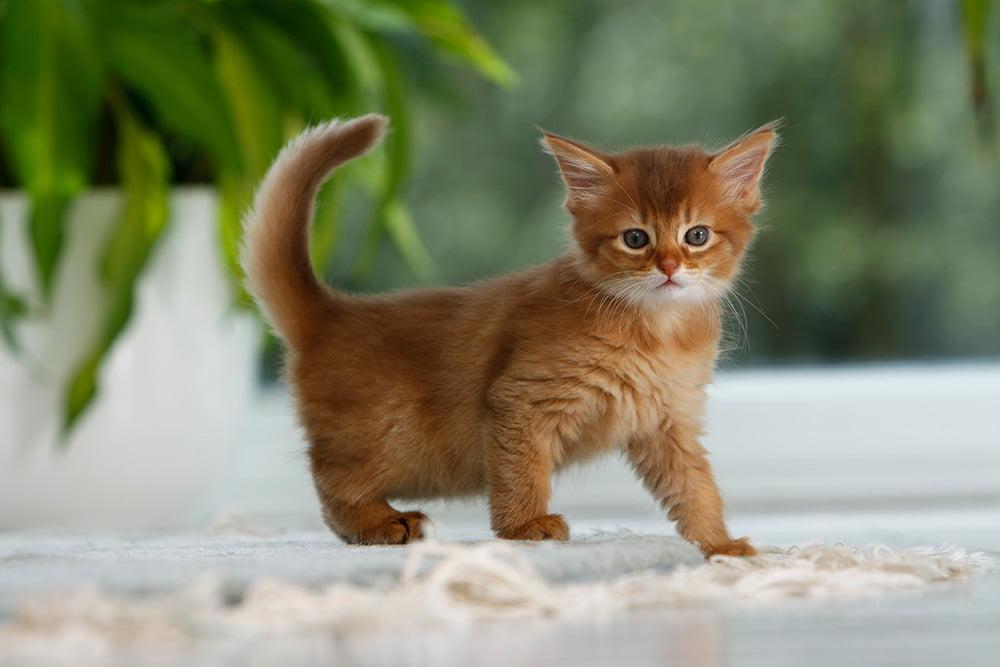 giardien bei katzen todlich