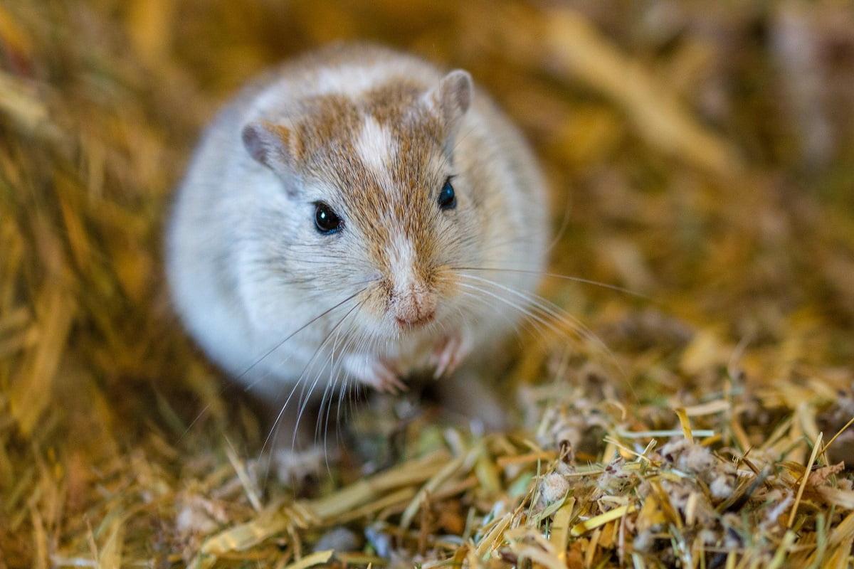 Typische Krankheiten Bei Mausen Herz Fuer Tiere De