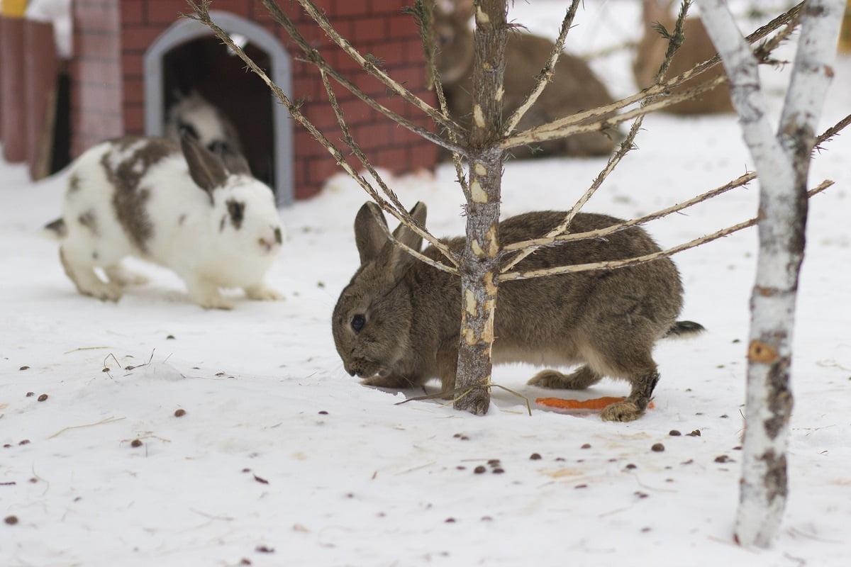 12+ Außenhaltung von Kaninchen   herz fuer tiere.de Kollektion