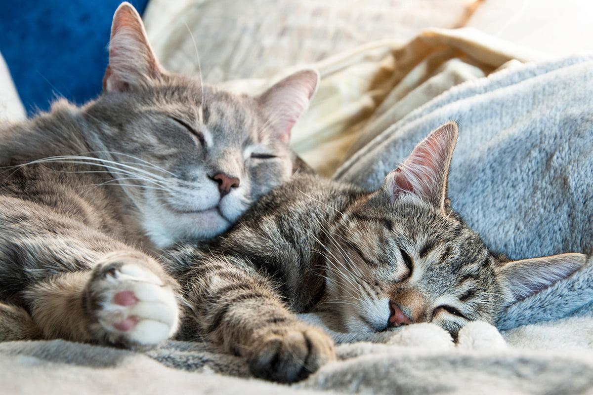 wenn katzen sich kennenlernen