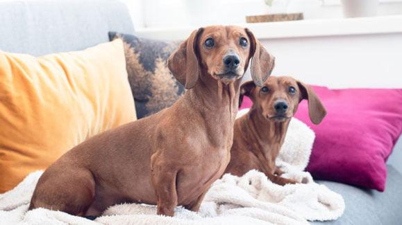 Haustiere In Der Mietwohnung Mietrecht Fur Tierhalter Ein Herz Fur Tiere Herz Fuer Tiere De