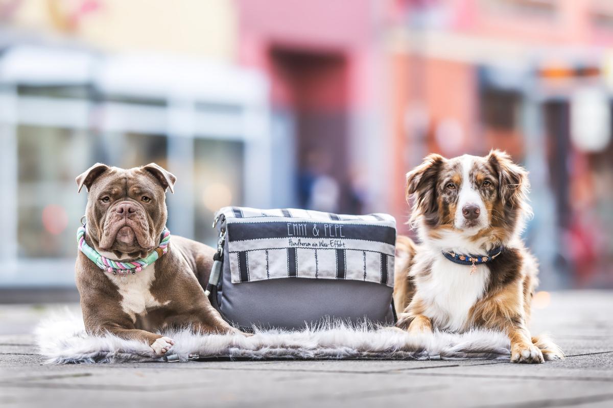 2in1 hunde-reisedecke und tasche gewinnen