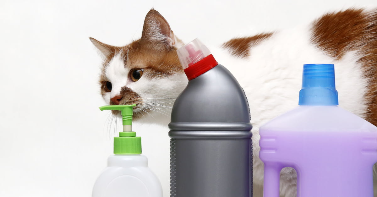 Desinfektionsmittel Katze