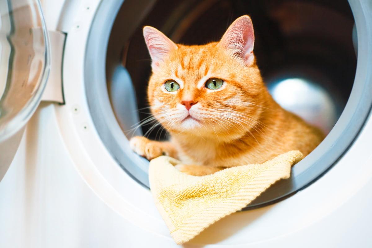 Kater in der Waschmaschine geschleudert