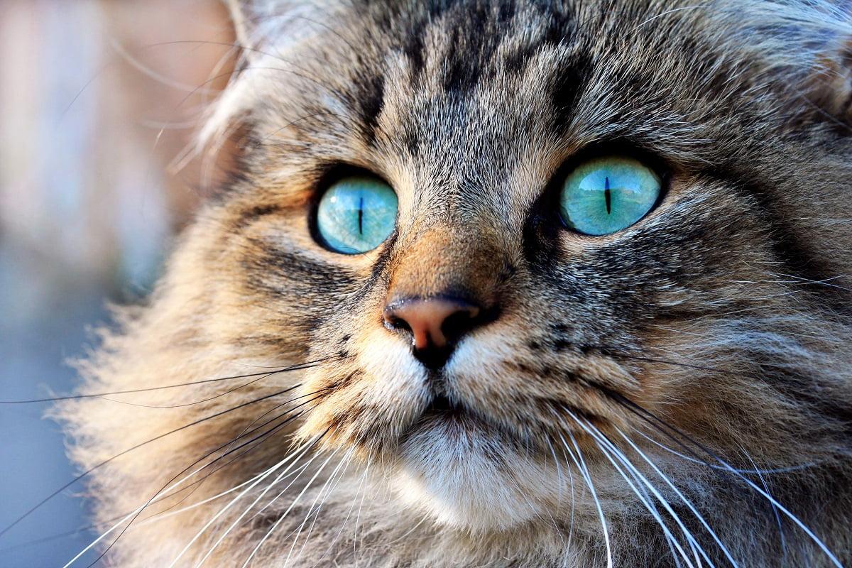 In diesen Farben sieht die Katze unsere Welt