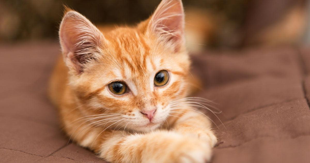 Katzenflüsterer Jackson
