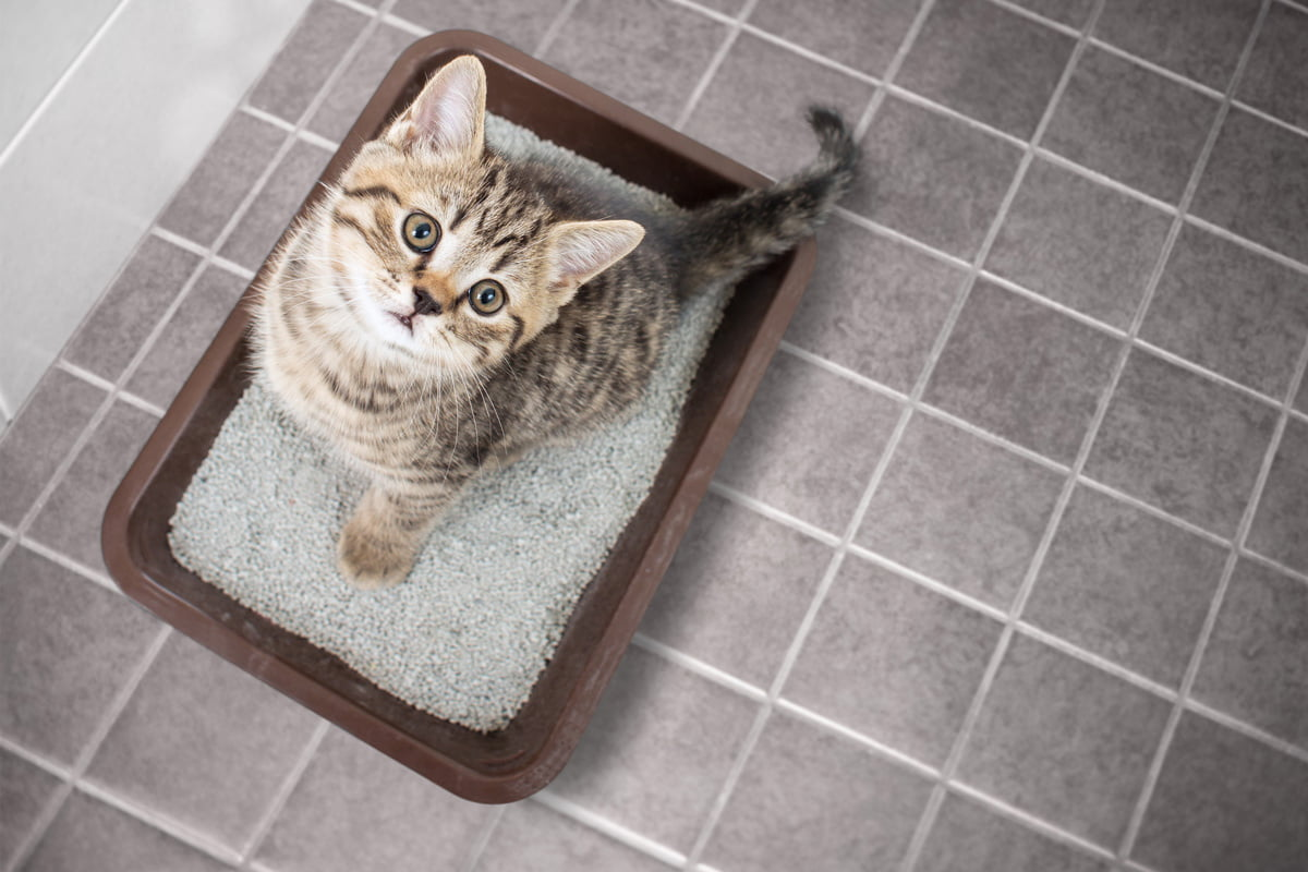 Katzenklo: 7 wichtige Tipps