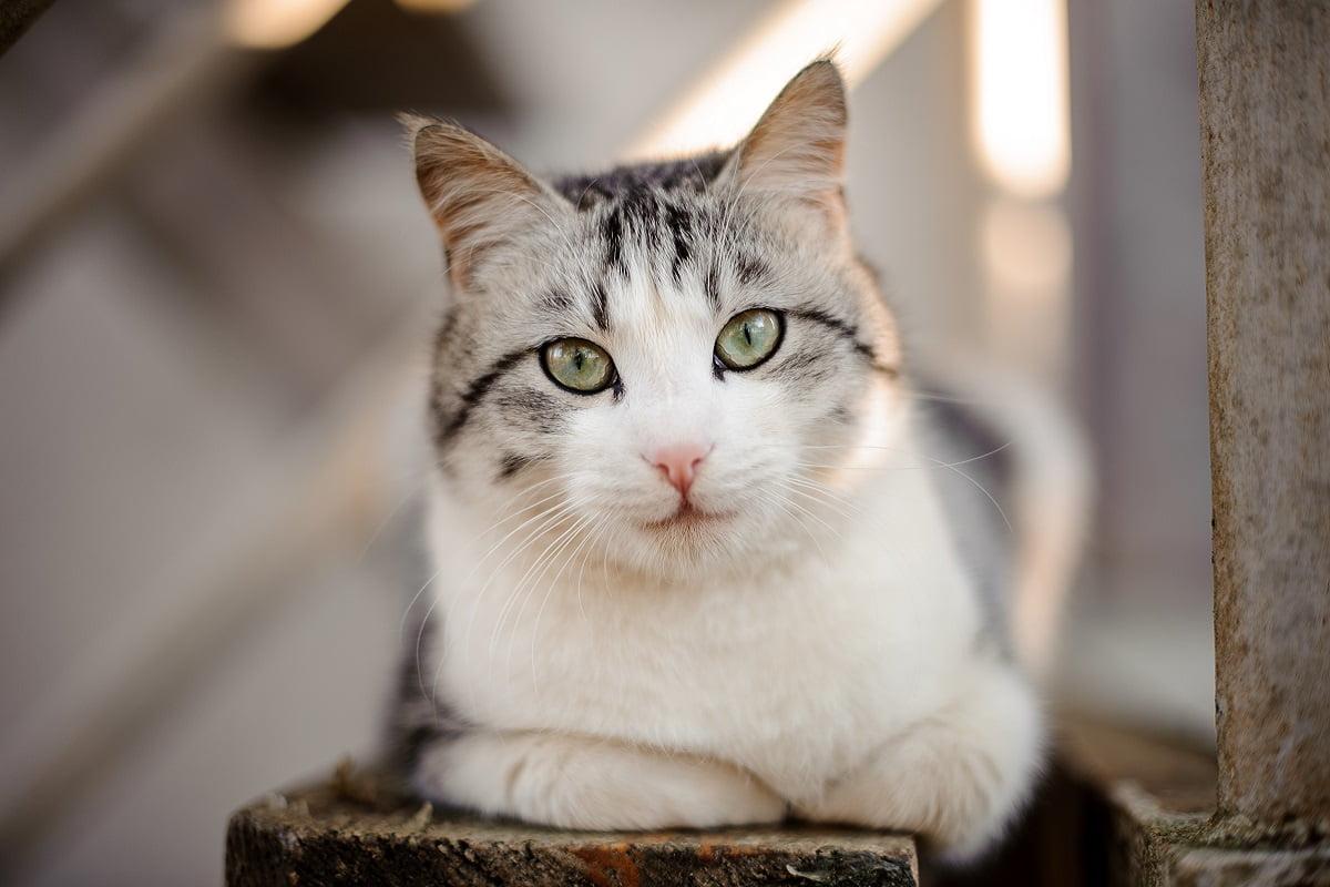 Katzennamen Kater