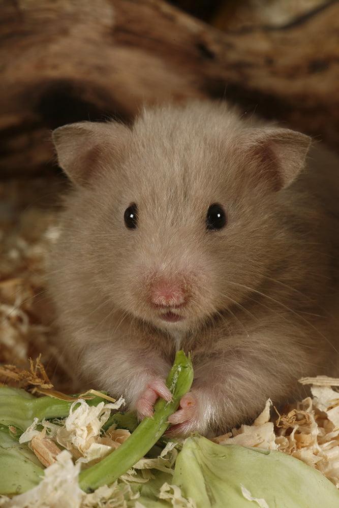 Hamster Stirbt
