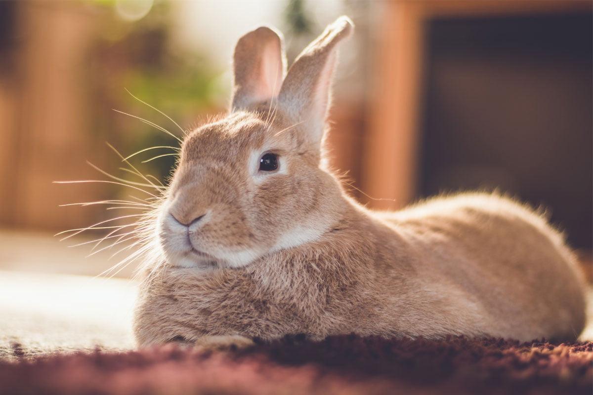 Spiele Für Kaninchen