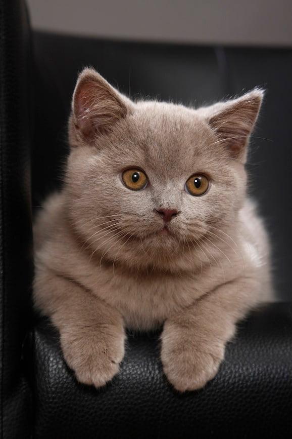 Katzenname