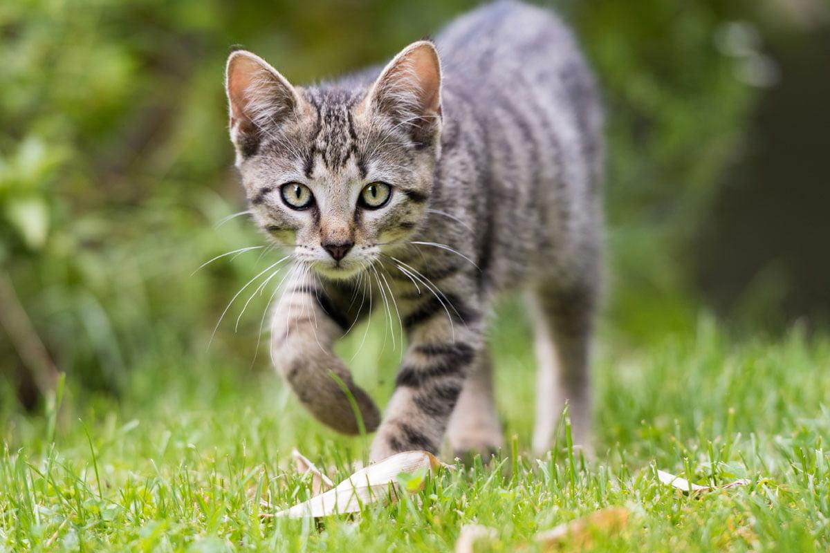 Alter der Katze bestimmen | herz-fuer-tiere.de
