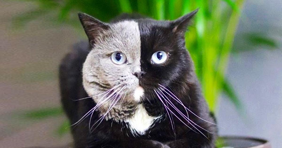 Katze Bei Den Schlümpfen