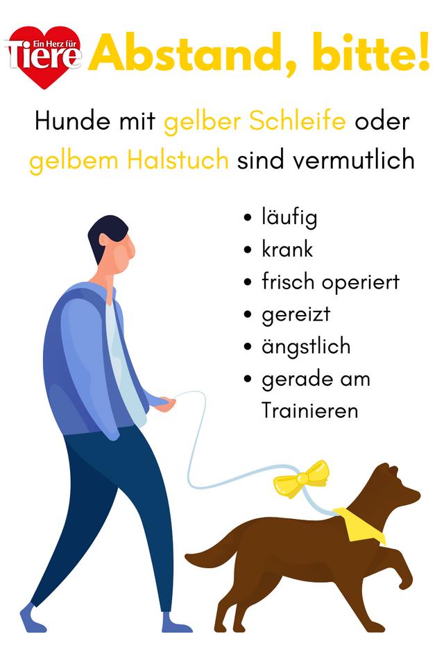 Gelbe Schleife: Das bedeutet sie für Hundehalter | herz